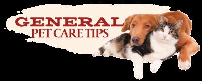 General Pet Care Tips