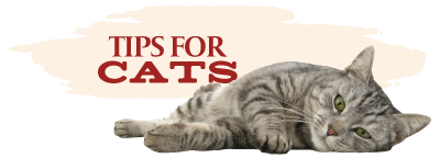 Tips for Cats