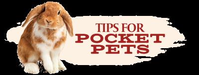 Tips for Pocket Pets